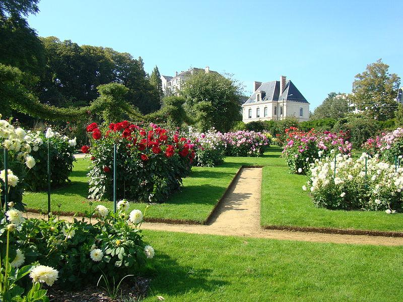 Aménagement d'un jardin sous-bois : tout ce qu'il faut savoir