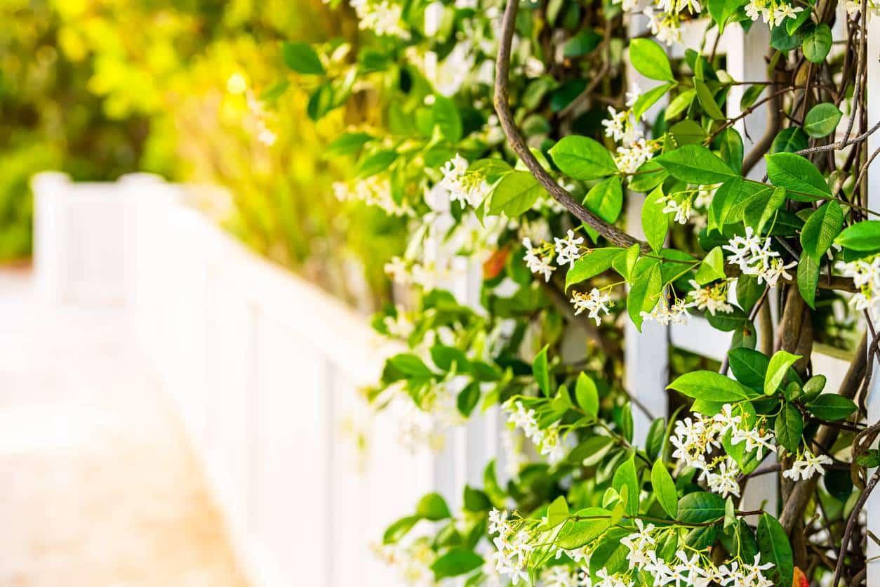 plantes grimpantes, décoration clôtures, grillages