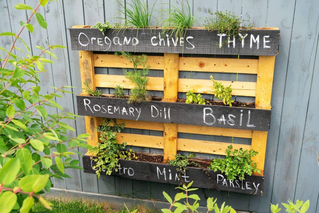étagère de plantes aromatiques