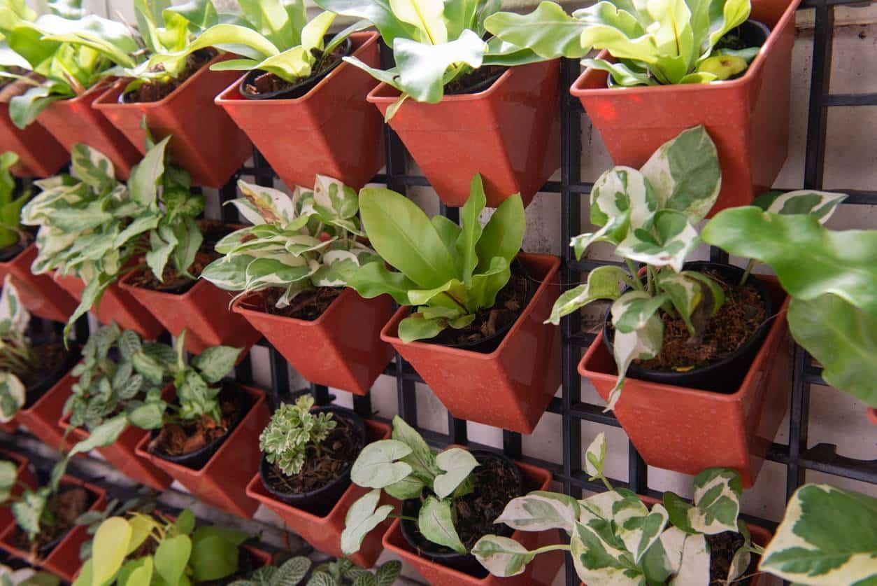 idée de décoration de clôture, plantes accrochées